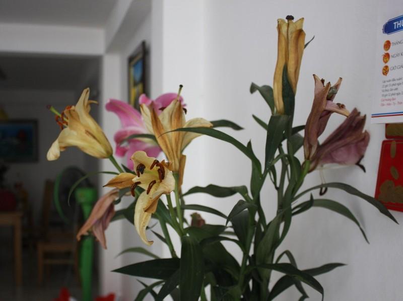 Mua phải hoa ly ướp lạnh, nhiều người 'méo mặt' dịp Tết - ảnh 4