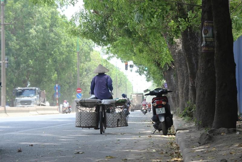 Chặt 1.300 cây trên đường Phạm Văn Đồng để mở đường - ảnh 3