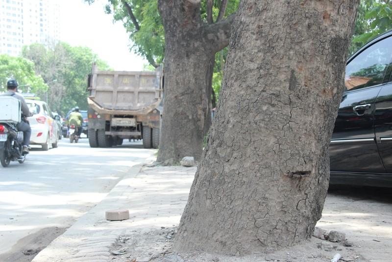 Chặt 1.300 cây trên đường Phạm Văn Đồng để mở đường - ảnh 4