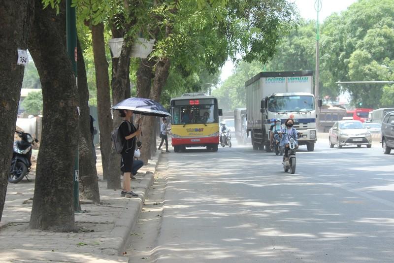 Chặt 1.300 cây trên đường Phạm Văn Đồng để mở đường - ảnh 5