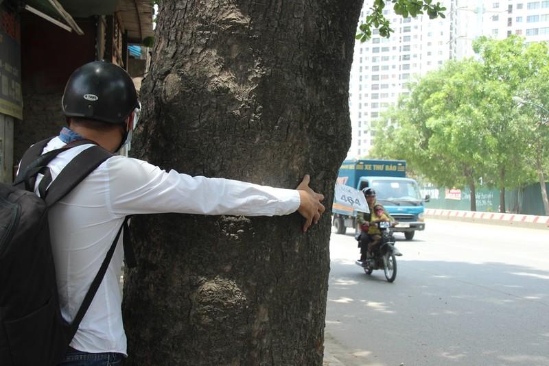 Chặt 1.300 cây trên đường Phạm Văn Đồng để mở đường - ảnh 6