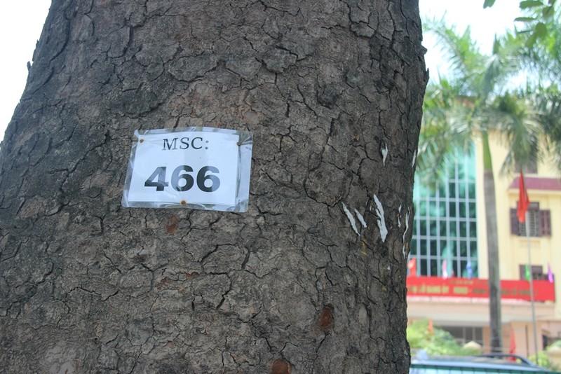 Chặt 1.300 cây trên đường Phạm Văn Đồng để mở đường - ảnh 7