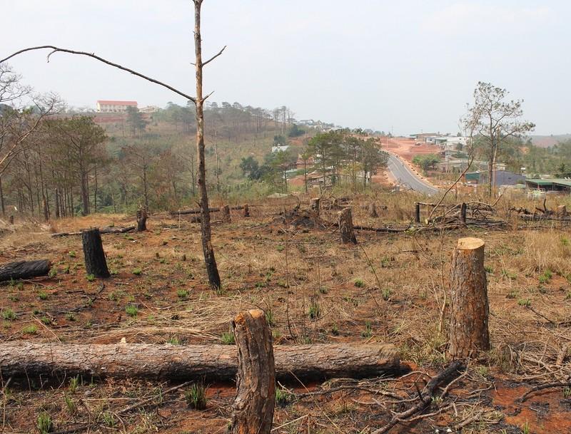 Bộ Công an: 'Xử' bảo kê, lấn chiếm đất rừng Tây Nguyên - ảnh 1