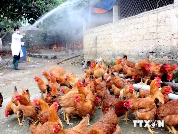 Công điện khẩn về tăng cường phòng chống dịch cúm gia cầm H5N6  - ảnh 1