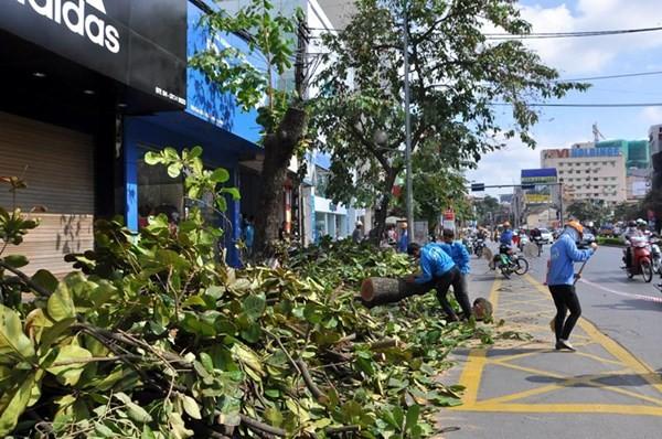 Chặt 6.700 cây xanh, Hà Nội đã khảo sát ra sao? - ảnh 2