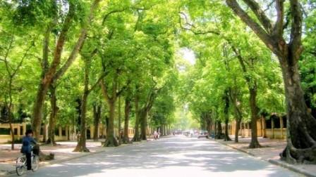 Chặt 6.700 cây xanh, Hà Nội đã khảo sát ra sao? - ảnh 3