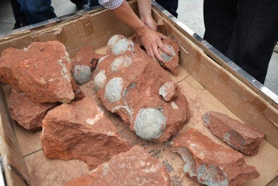 Trung Quốc: Phát hiện hàng chục quả trứng khủng long dưới nền đường - ảnh 2