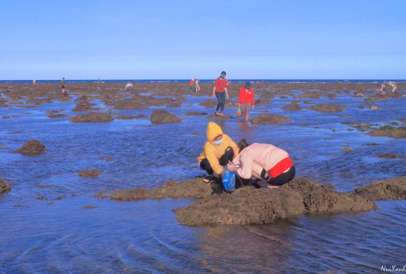 Choáng ngợp với rạn san hô Hải Chữ ở Phan Rang - ảnh 1