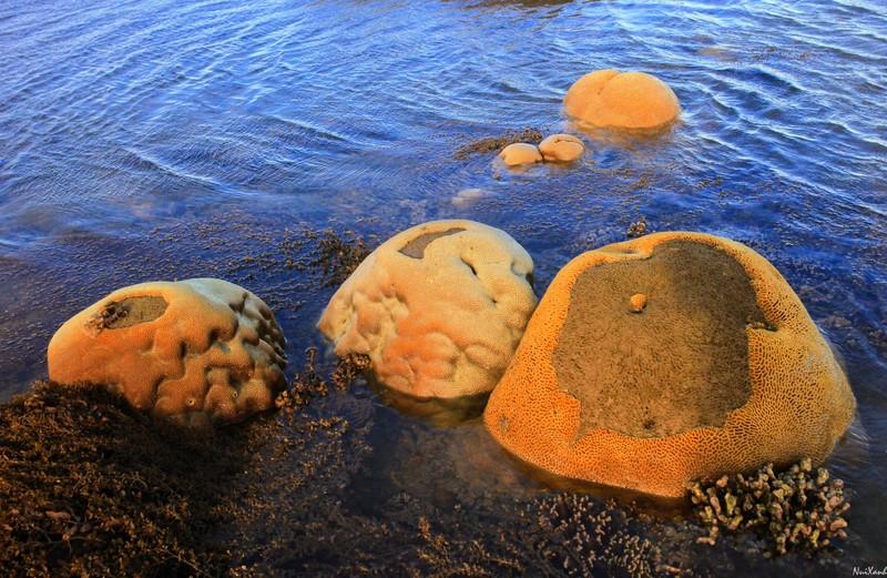 Choáng ngợp với rạn san hô Hải Chữ ở Phan Rang - ảnh 3