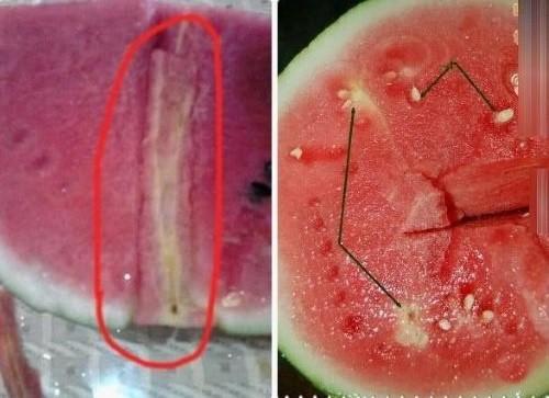 Ăn dưa hấu bị tiêm thuốc dễ gây ngộ độc, đột biến gen  - ảnh 2