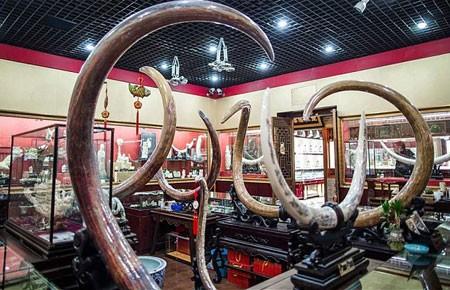 Buôn ngà voi ở Trung Quốc: Khó chặn - ảnh 1