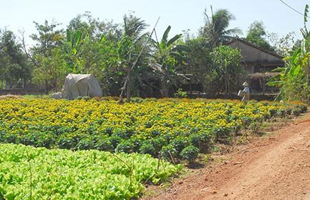 TP.HCM: Đất nông nghiệp sẽ được xây dựng tạm  - ảnh 1