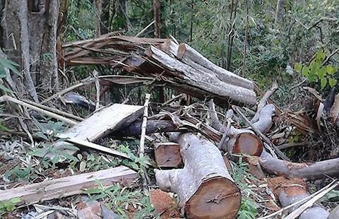 Phát hiện thêm hai điểm phá rừng phòng hộ Sông Lũy - ảnh 1