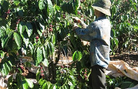 Starbucks và nỗi buồn cà phê Việt  - ảnh 1