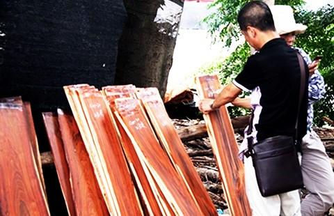 Bán cả 'rừng non' cho Trung Quốc - ảnh 2