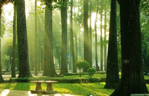 Đã nghe đã thấy: Lại 33 cây xanh nữa sắp 'thọ án' - ảnh 1