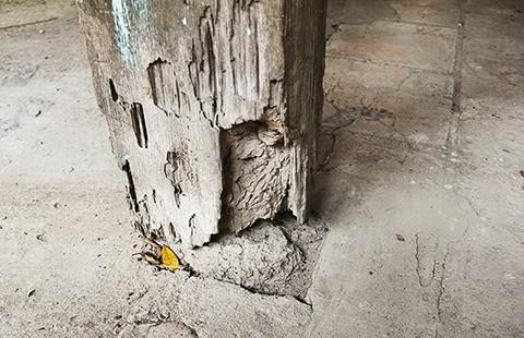 Ngôi đình cổ nhất Nam Bộ đang 'thoi thóp' - ảnh 4