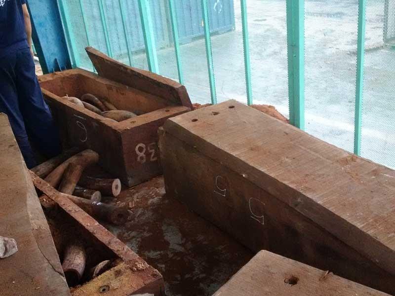 500 kg nghi là ngà voi qua cảng Cát Lái - ảnh 1