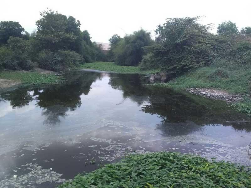 Nhà máy cồn 'khủng' đe dọa bức tử sông Gia Ui - ảnh 1