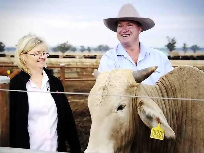 Người Việt sang Úc mua trang trại nuôi bò  - ảnh 1