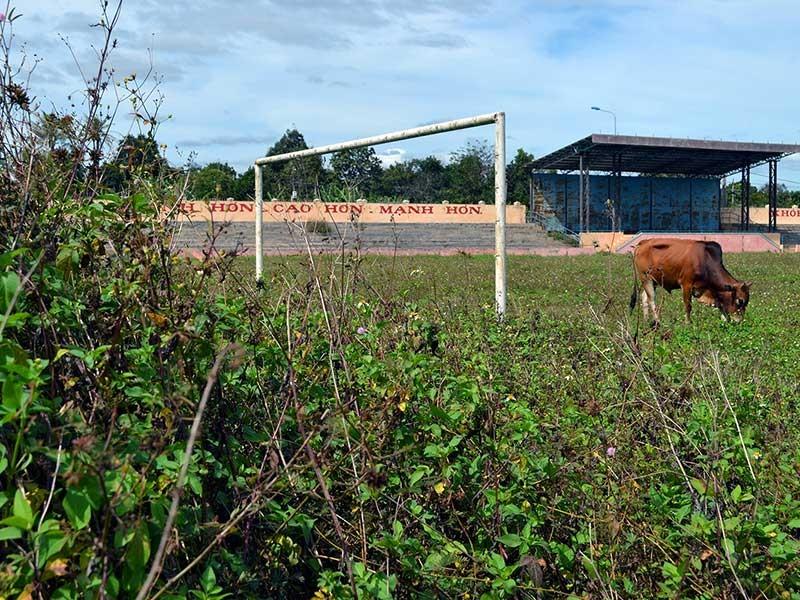 Sân vận động tiền tỉ dành để… thả bò - ảnh 1