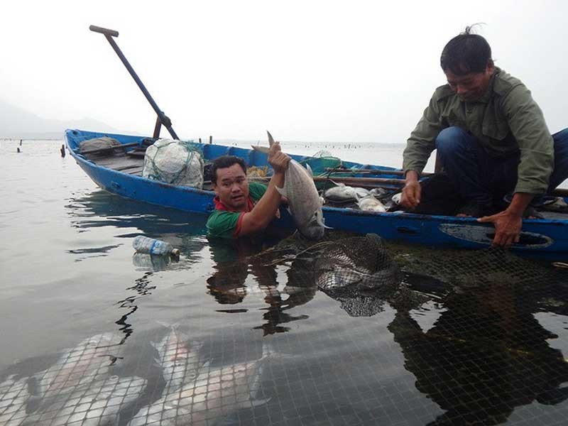 Thừa Thiên-Huế: Cá chết trắng lồng chưa rõ nguyên nhân  - ảnh 1