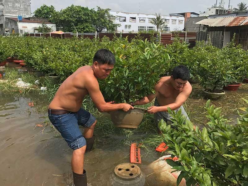 Dân Sài Gòn phập phồng lo tết… ngập - ảnh 1