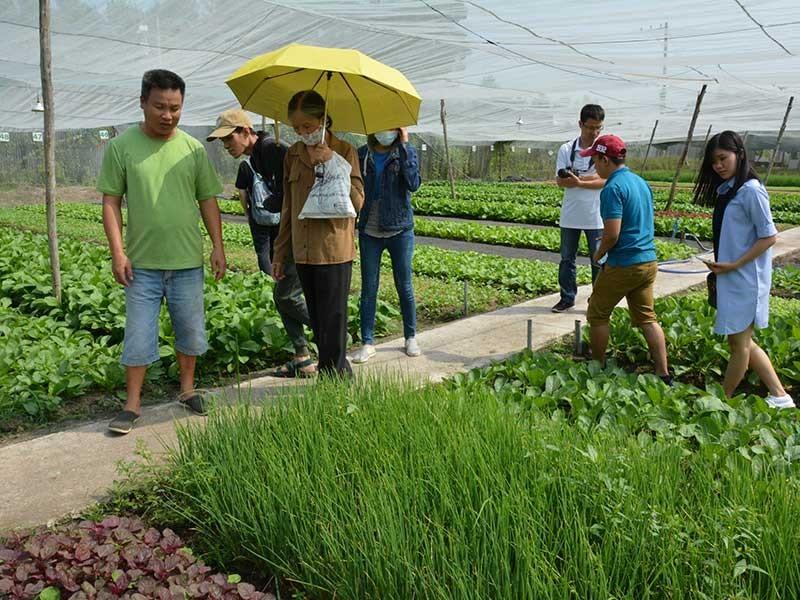 'Cơn sốt' nông nghiệp organic - ảnh 1