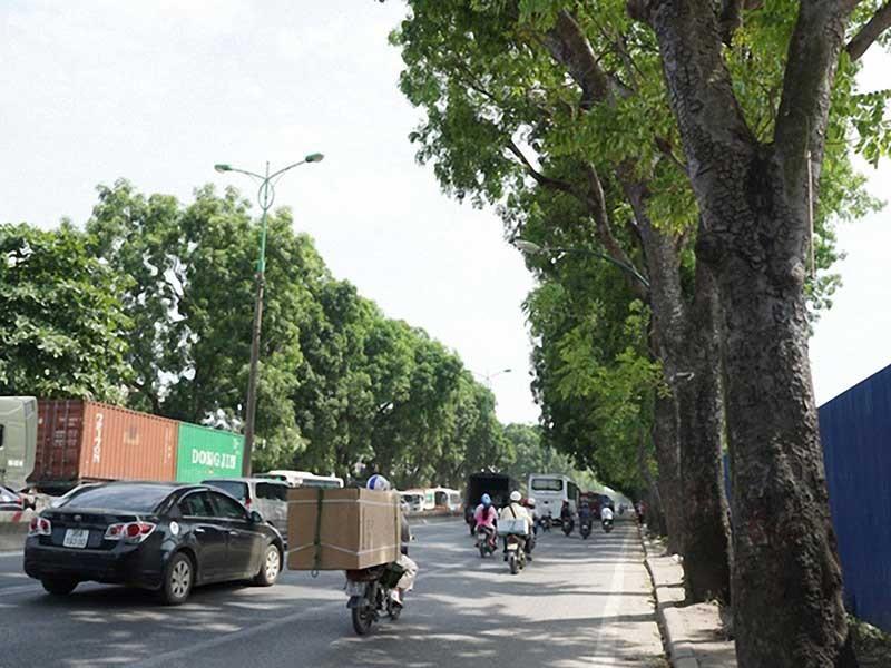 Hà Nội không chặt 1.300 cây ở đường Phạm Văn Đồng - ảnh 1