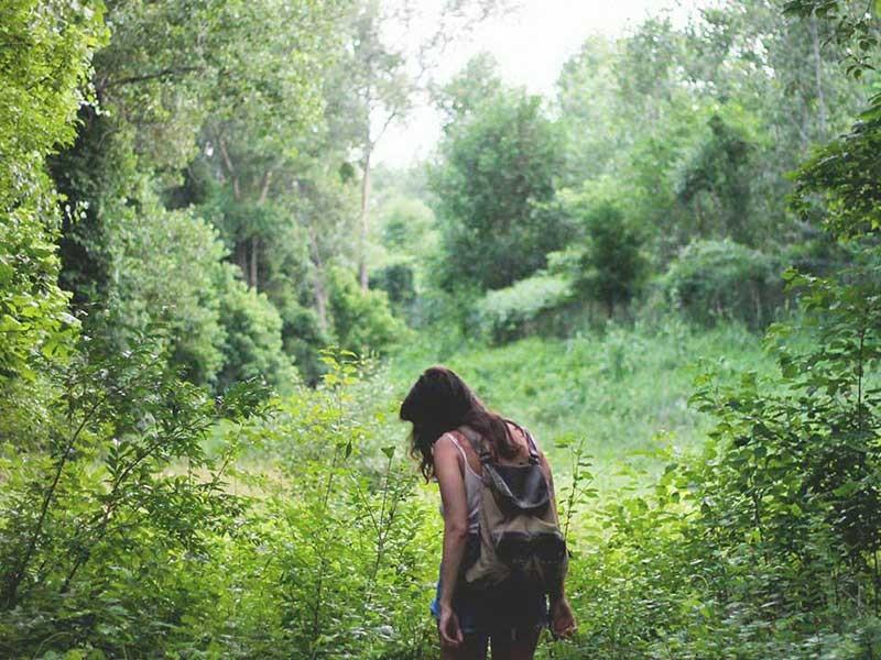 'Tắm rừng' nâng cao chất lượng cuộc sống - ảnh 1