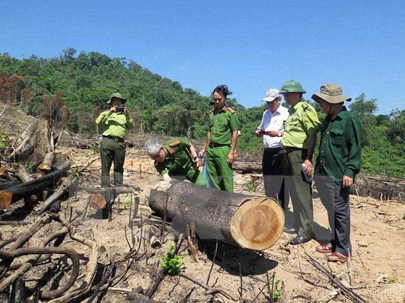Thủ tướng yêu cầu điều tra vụ phá rừng ở Bình Định - ảnh 1