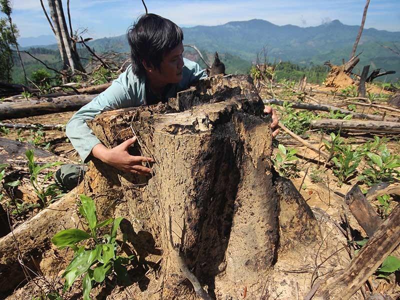 Hàng trăm ha rừng Quảng Nam bị phá - ảnh 1