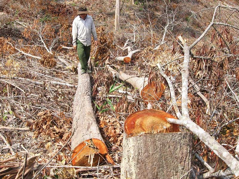 Kiến nghị xử lý quan chức tiếp tay phá rừng - ảnh 1