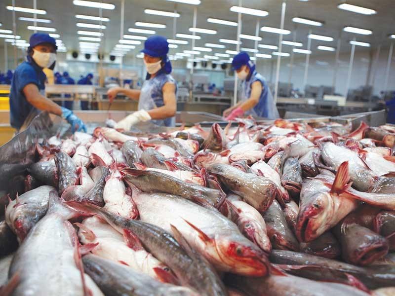 Bài học đắt giá cho hải sản xuất khẩu Việt Nam - ảnh 2