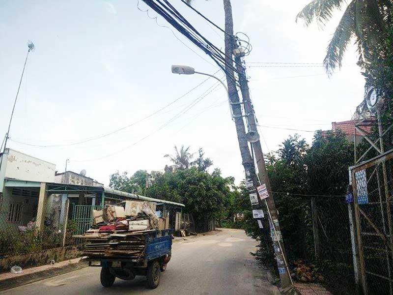 Cột điện dựa cây dừa - ảnh 1
