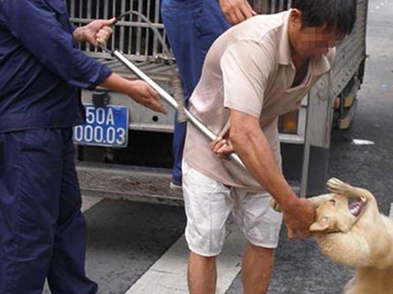 Chuyện dài việc nuôi chó ở thành phố - ảnh 1