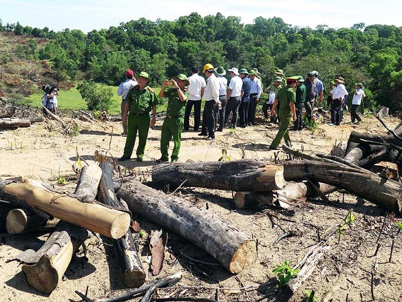 Giám đốc chủ mưu phá 61 ha rừng bị bắt - ảnh 1