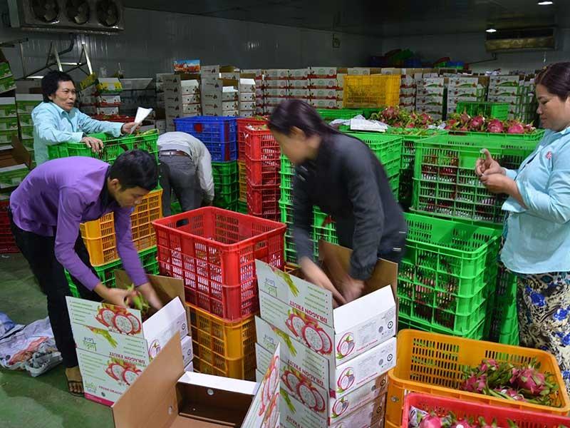 Thị trường Trung Quốc thay đổi, nhiều DN Việt lao đao - ảnh 1
