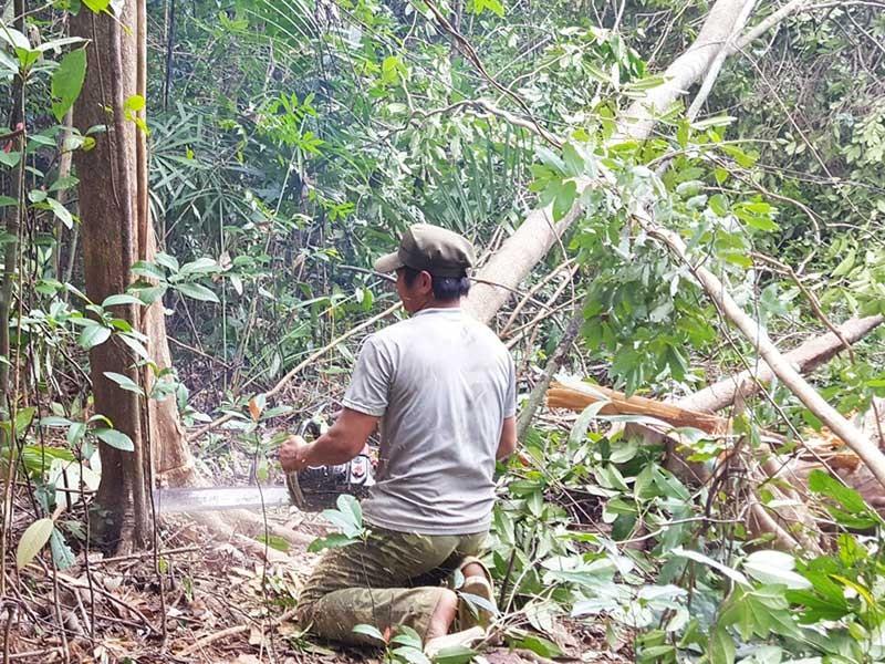 Cử tri bức xúc nạn phá rừng, thuốc dỏm, tham nhũng - ảnh 1
