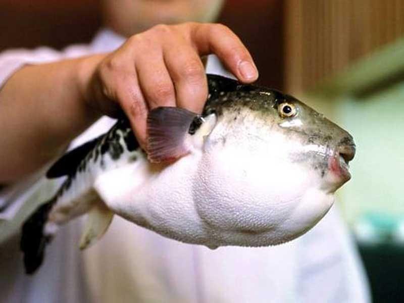 Dân Nhật lo sợ vì cá cực độc lọt ra siêu thị - ảnh 1