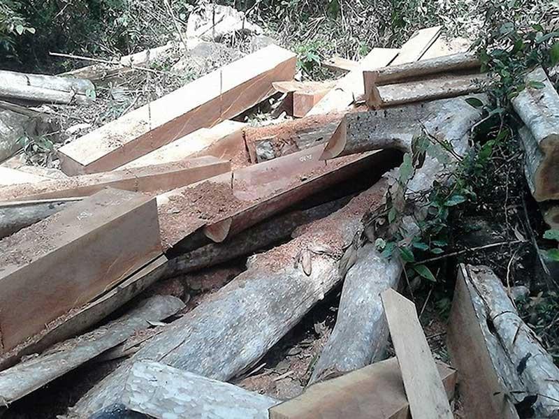 13 vụ án phá rừng Sông Lũy phải tạm đình chỉ - ảnh 1