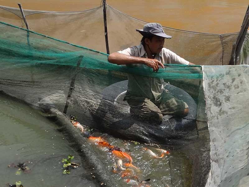 Nước đen vây bủa, triệt đường sống người nuôi cá - ảnh 1