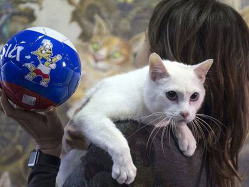 Chú mèo ở Cung điện Mùa đông kế thừa bạch tuộc Paul - ảnh 1