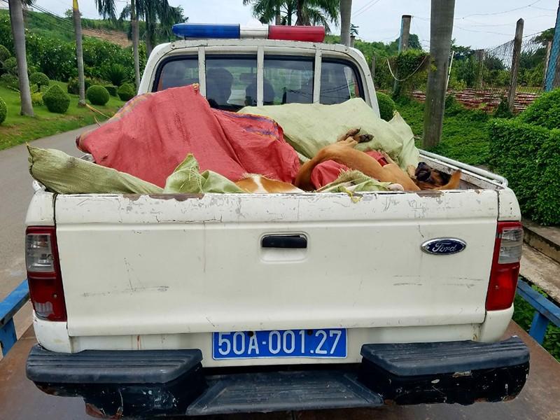 TP.HCM: Nhiều nhóm trộm chó ở Bình Tân - ảnh 2