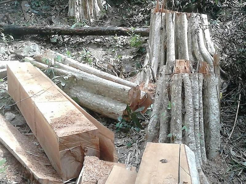 Yêu cầu bảo vệ hiện trường vụ phá rừng Sông Lũy - ảnh 1