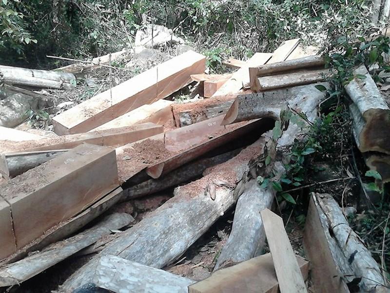 Yêu cầu bảo vệ hiện trường vụ phá rừng Sông Lũy - ảnh 2