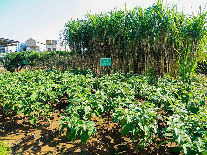 Ajinomoto và hành trình kiến tạo môi trường xanh - ảnh 2