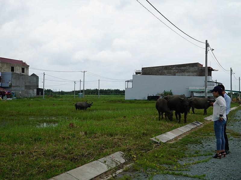 Còn 1 m2 đất nông nghiệp cũng không được làm dự án? - ảnh 1