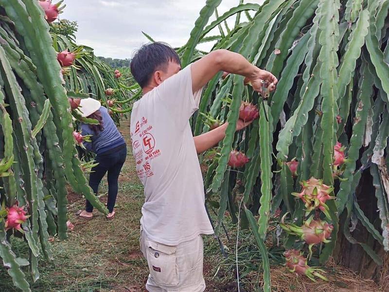 Tham tán thương mại Trung Quốc nói gì về hàng Việt? - ảnh 2