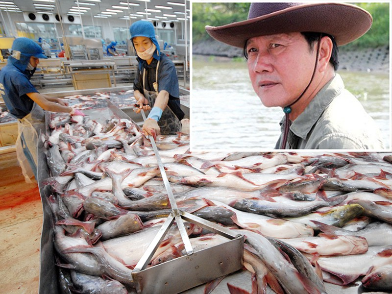 Vua cá Dương Ngọc Minh tìm lại danh tiếng đã mất - ảnh 1